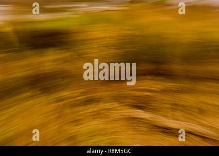 beautiful image of an explosion of yellow, green and brown lights, autumn concept, copy space or text background - Stock Photo