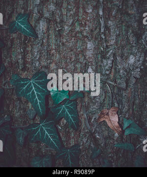 Matte leafs in front of a wooden tree trunk background - Stock Photo