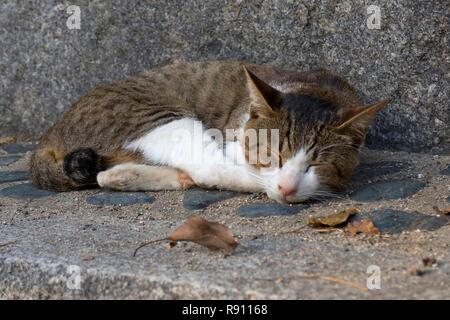 Sleeping alley cat on the street in autumn - Stock Photo