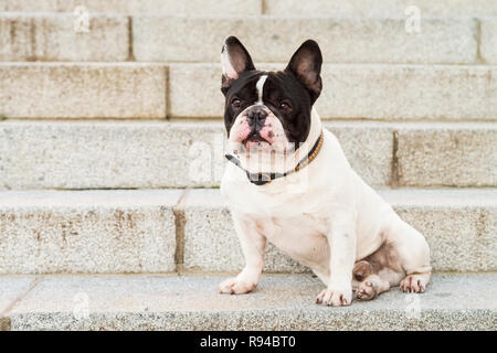 Urban scene. Dog sitting on a stairs in the street. - Stock Photo