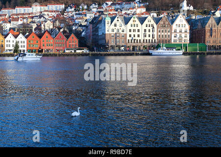 A lonely mute swan swimming in front of the historic UNESCO buildings at Bryggen, along Vaagen, in the inner port of Bergen, Norway. - Stock Photo