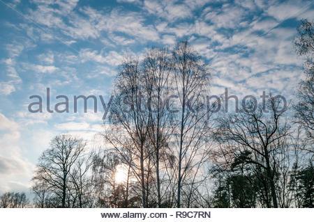 Streifen aus Mischwald unter blauem Himmel im Gegenlicht am Rande eines Feldes. - Stock Photo