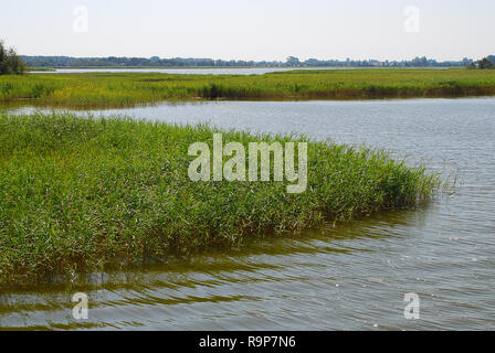Bodden landscape with coastal plants at Baltic Sea coast on sunny summer day, Darss, Germany. The  Darss is the middle part of the peninsula of Fischl - Stock Photo