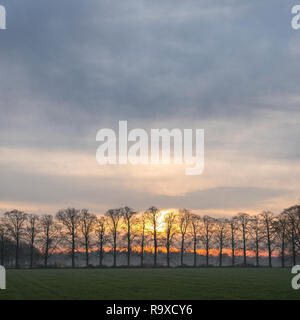 row of oak trees with rising sun and colorful sky in the netherlands - Stock Photo