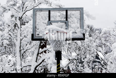 A basketball hoop is full of snow with trees covered in snow in the background after a spring snow storm in Long Island, New York. - Stock Photo