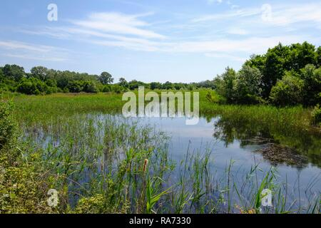 Wetland Ulcinjska solana, near Ulcinj, Montenegro - Stock Photo