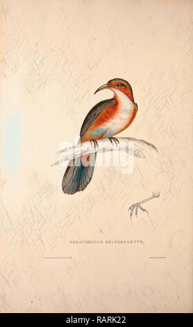 Pomatorhinus Erythrogenys, Rusty-cheeked Scimitar Babbler. a species of bird in the Timaliidae family. It is found in reimagined - Stock Photo