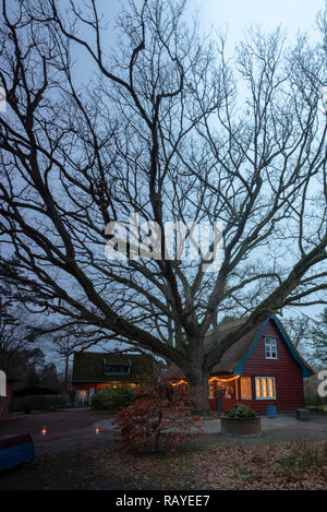 Prerow, Germany - December 29, 2018: View of the Darß Museum in Prerow on the Baltic Sea with an ancient tree in the middle, Germany. - Stock Photo