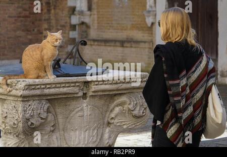 Venedig, Katze - Stock Photo