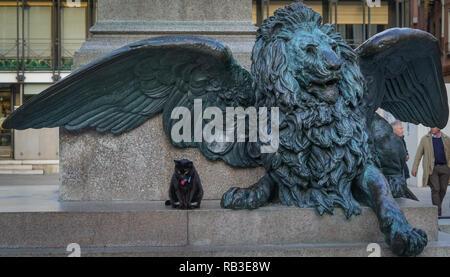 Löwe mit Katze, Venedig - Stock Photo