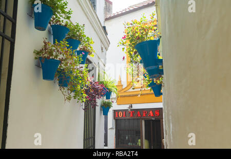 Hanging flowerpots on white walls, Calleja De Las Flores, Cordoba, Andalusia, Spain - Stock Photo
