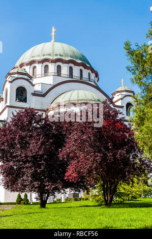Belgrade, Serbia - June 09, 2013: Famous Saint Sava church exterior facade architecture surrounded by vibrant red leaves trees in Belgrade, Serbia - Stock Photo