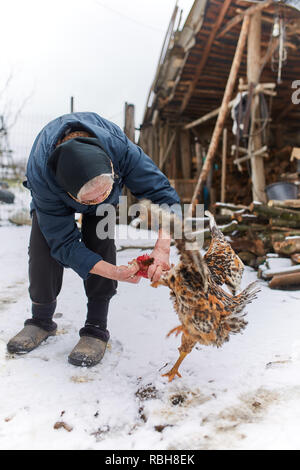 Old woman hand feeding chickens in her backyard - Stock Photo