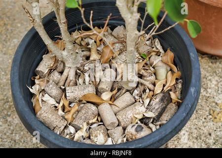 pot plant with wine cork mulch - Stock Photo