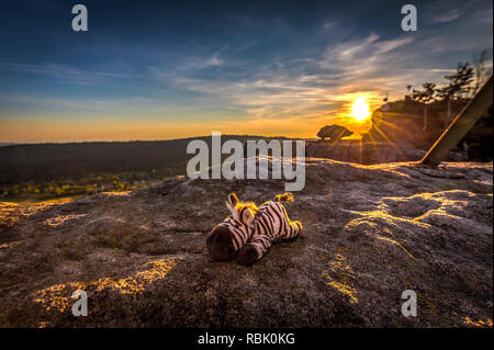 Cute stuffed toy zebra resting in the golden rays of sunset - Stock Photo