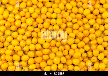Background of fresh sea buckthorn berries. - Stock Photo