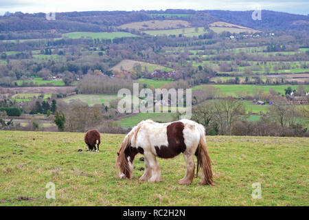 A breed of small horse, probably a gypsy horse, eats grass in a hillside field in the North Downs, near Shoreham. A black sheep grazes beyond the hors - Stock Photo