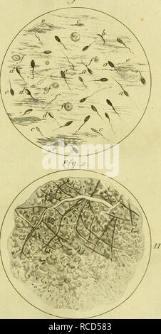 . Dissertation sur la génération, les animalcules spermatiques, et ceux d'infusions, avec des observations microscopiques sur le sperme et sur différentes infusions. Infusoria; Spermatozoa; Animalcules; Reproduction. Fui. i. pli. Please note that these images are extracted from scanned page images that may have been digitally enhanced for readability - coloration and appearance of these illustrations may not perfectly resemble the original work.. Gleichen-Russwurm, Wilhelm Friedrich, Freiherr von, 1717-1783. A Paris : De l'imprimerie de Digeon - Stock Photo