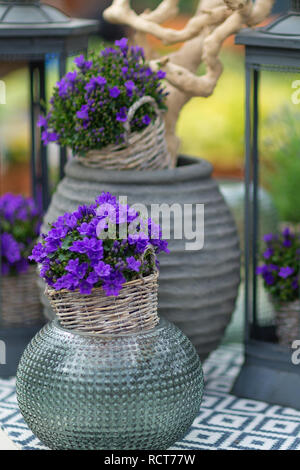 Close up of small bluebells called campanula in a flower pot on the table with decorative elements in the background. Selective focus. - Stock Photo
