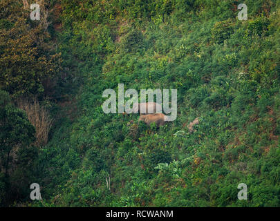 Morning landscape in Gavi ecotourism forest with wide variety of birds, monkeys and a herd of elephants in its natural habitat - Stock Photo