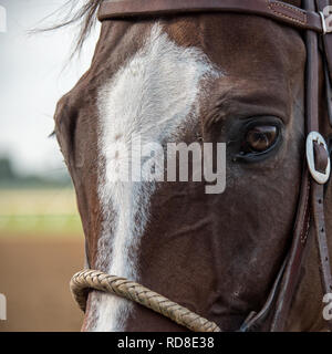 Closeup of a Horse at the Track with Reflection in Eye - Stock Photo