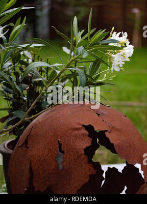 Bodendecker weiss Garten sommer terrasse - Stock Photo