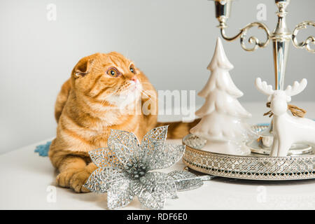 Scottish Fold red cat with candlestick - Stock Photo