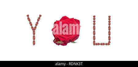 Fine art still life color image of the word you constructed from floral/flower letter/character/font made of rose blossom macros on white background - Stock Photo