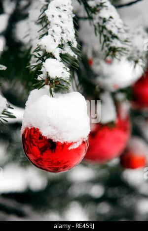 Snow-covered Christmas tree with red balls - Stock Photo