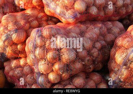 Bulbs, packed in large nets, lying on the market and illuminated by the sun. South of Ukraine - Stock Photo