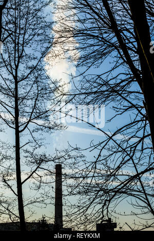 View of a smoke stack as seen through a forest of Spring trees before they sprout their leaves, Seattle, Washington, USA - Stock Photo