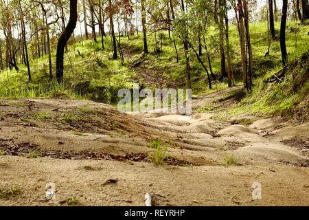 A dirt fire access road in Mia Mia State Forest, Queensland, Australia - Stock Photo