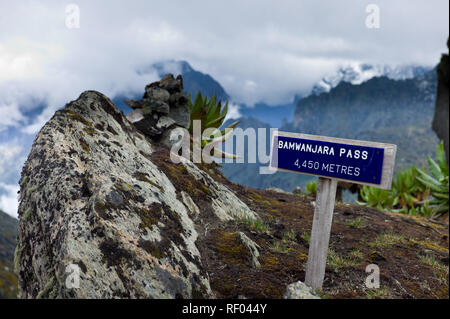 On Day 4 of the  Kilembe Route, Rwenzori National Park, Uganda, hikers continue to climb in the Afro alpine vegetation zone to high Bamwanjara Pass. - Stock Photo