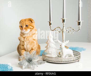Scottish Fold red cat with candlestick on a white background on holiday. Cat and etiquette. - Stock Photo