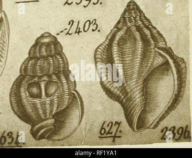 . [Philip Pearsall Carpenter's illustrations of mollusk specimens, accompanied by species indexes to selected works by Carpenter] [graphic]. Mollusks; Reigen, Frederick; Adams, C. B. (Charles Baker), 1814-1853; British Museum (Natural History). Department of Zoology; Caecidae. mi.. Please note that these images are extracted from scanned page images that may have been digitally enhanced for readability - coloration and appearance of these illustrations may not perfectly resemble the original work.. Carpenter, Philip P. (Philip Pearsall),1819-1877,creator; Carpenter, Philip P. (Philip Pearsall) - Stock Photo