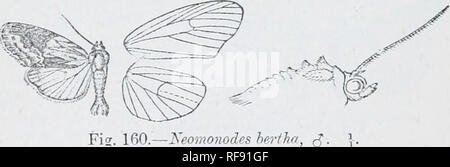 . Catalogue of Lepidoptera Phalaenae in the British Museum. Moths. 564 xocrriDj:. cosla and termen to vein 2 tinged witli hrown, a black discoidal spot and curved rather maculate postraedial line. Hah. Brazil, Sao Paulo (Z). Jones), type t 2 in U.S. Xat. Miis. Exp. 26 millim. Genus NEOMONODES, nov. Type, N. bertha. Proboscis aborted, minute ; palpi upturned, the 2nd joint: reacliin:^ vertex of head and slightly fringed with scales in front, the 3rd moderate; frous smooth; eyes large, round; antenna of male ciliated with tuft of hair in front of basal joint; tliorax clothed chiefly with scales, - Stock Photo