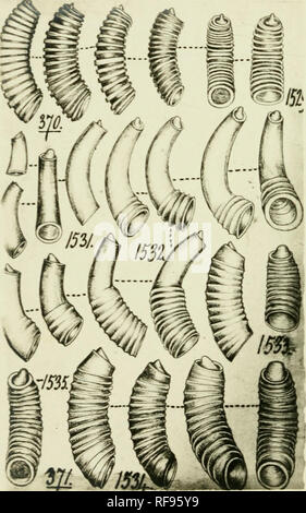 . [Philip Pearsall Carpenter's illustrations of mollusk specimens, accompanied by species indexes to selected works by Carpenter] [graphic]. Mollusks; Reigen, Frederick; Adams, C. B. (Charles Baker), 1814-1853; British Museum (Natural History). Department of Zoology; Caecidae. . Please note that these images are extracted from scanned page images that may have been digitally enhanced for readability - coloration and appearance of these illustrations may not perfectly resemble the original work.. Carpenter, Philip P. (Philip Pearsall),1819-1877,creator; Carpenter, Philip P. (Philip Pearsall),18 - Stock Photo