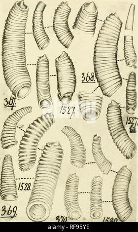 """. [Philip Pearsall Carpenter's illustrations of mollusk specimens, accompanied by species indexes to selected works by Carpenter] [graphic]. Mollusks; Reigen, Frederick; Adams, C. B. (Charles Baker), 1814-1853; British Museum (Natural History). Department of Zoology; Caecidae. > 57o> '-""""^'/m. Please note that these images are extracted from scanned page images that may have been digitally enhanced for readability - coloration and appearance of these illustrations may not perfectly resemble the original work.. Carpenter, Philip P. (Philip Pearsall),1819-1877,creator; Carpenter, Phili - Stock Photo"""