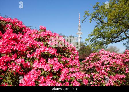 Japanese garden with TV tower and rhododendron blossom, Hamburg, Germany, Europe I Japanischer Garten mit Fernsehturm und Rhododendronblüte, Hamburg,  - Stock Photo