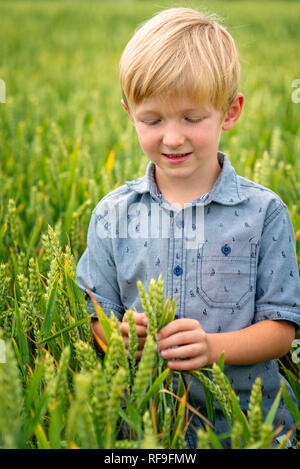 A small, blond boy in the field of cereals. - Stock Photo