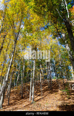 Autumn leaves changing on trees next to the Wayside House. Minute Man National Historical Park, Massachusetts - Stock Photo