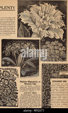 """. Key to profit in the garden. Nursery stock Pennsylvania Philadelphia Catalogs; Vegetables Seeds Catalogs; Flowers Seeds Catalogs; Agricultural implements Catalogs. Madeira Mignonette or Mexican Vine The old favorite """" Climbing Mignonette. Thick, glossy leaves, and long, hanging stems of feath- ery, fragrant, white flowers. Each 5c., doz. 50c., 100^3.50. JAPAN IRIS Iris Keempferi. The flowers are enormous, averaging from six to eight inches across and of inde- scribable and charming hues and colors, varying like watered silk in the sunlight, the prevailing colors being white, yellow, cri - Stock Photo"""
