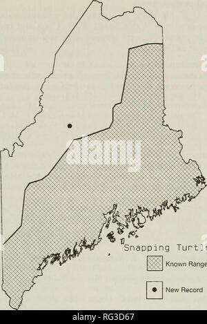 . The Canadian field-naturalist. Natural history. i 1995 Notes 445. Snapping Turtle [:â â .] Known Range New Record Figure 1. Distribution of the Snapping Turtle, Chelydra serpentina serpentina, in Maine. The hatched area depict the limit based on Coulter (1992) and the solid circle is the observation from Moosehead Lake (see text).. Please note that these images are extracted from scanned page images that may have been digitally enhanced for readability - coloration and appearance of these illustrations may not perfectly resemble the original work.. Ottawa Field-Naturalists' Club. Ottawa, Ott - Stock Photo