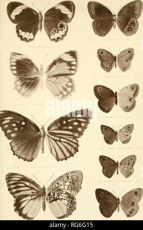 . The butterflies of India, Burmah and Ceylon. A descriptive handbook of all the known species of rhopalocerous Lepidoptera inhabiting that region, with notices of allied species occurring in the neighbouring countries along the border; with numerous illustrations. Butterflies; Butterflies; Butterflies. PLATE XVII.. Pift. Gl. DTCTI9 ViSODEVi, Mooru Tpiiihi&ia SASR&. Moorc. rf. Please note that these images are extracted from scanned page images that may have been digitally enhanced for readability - coloration and appearance of these illustrations may not perfectly resemble the origina - Stock Photo