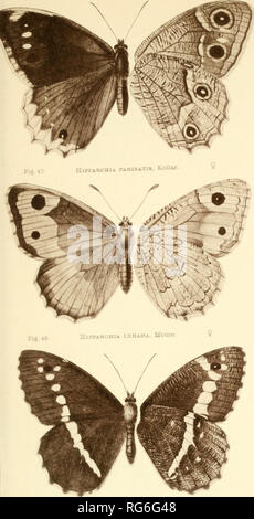 . The butterflies of India, Burmah and Ceylon. A descriptive handbook of all the known species of rhopalocerous Lepidoptera inhabiting that region, with notices of allied species occurring in the neighbouring countries along the border; with numerous illustrations. Butterflies; Butterflies; Butterflies. Fij. i9. AnLOCiBA WERAHOA. Lang. ,^. Please note that these images are extracted from scanned page images that may have been digitally enhanced for readability - coloration and appearance of these illustrations may not perfectly resemble the original work.. Marshall, G. F. L. (George Frederick  - Stock Photo