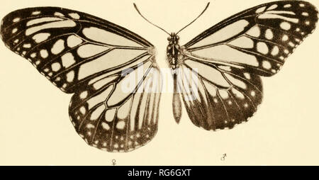 . The butterflies of India, Burmah and Ceylon. A descriptive handbook of all the known species of rhopalocerous Lepidoptera inhabiting that region, with notices of allied species occurring in the neighbouring countries along the border; with numerous illustrations. Butterflies; Butterflies; Butterflies. 511^.4. iBEOPSis DAOS. Boisduval ^. FiJ 5. Danais MELANED3. Cramer.. Please note that these images are extracted from scanned page images that may have been digitally enhanced for readability - coloration and appearance of these illustrations may not perfectly resemble the original work.. Marsh - Stock Photo