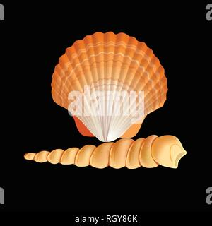 Scallop Seashell Vector. Realistic Scallops Shell Isolated On black Background Illustration - Stock Photo