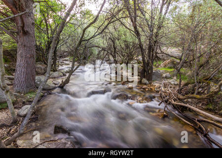 Manzanares river water stream going down in between the trees inside the forests of La Pedriza at Guadarrama National Park in Madrid countryside - Stock Photo