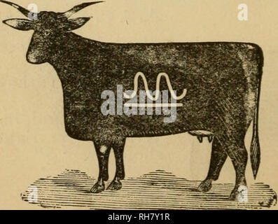 . Brand book. Cattle brands; Cattle brands. ROBT ETOCK, Post-office address, Caldwell, Kas. Range, Turkey Creek. Horse brand, same as cattle, on left hip. W. S. MENDENHALL, LEWIS CONRAD, Agent, Post-office address, *' Winfield, Kas. Brand, with bar un- der on either side or hip. Horse brand, same on either shoulder or hip.. Please note that these images are extracted from scanned page images that may have been digitally enhanced for readability - coloration and appearance of these illustrations may not perfectly resemble the original work.. Brush, Wilmot Proviso, [from old catalog] comp. Kansa - Stock Photo