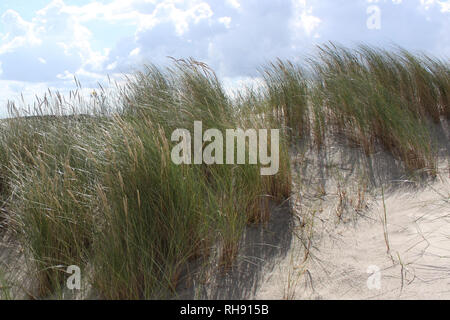 Wind chime of vegetation, sand dunes - beach on Isle of Spiekeroog Germany under blue cloudy sky - Stock Photo